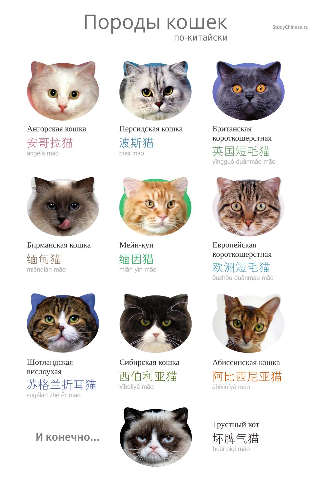 Кошки фото с названиями для детей